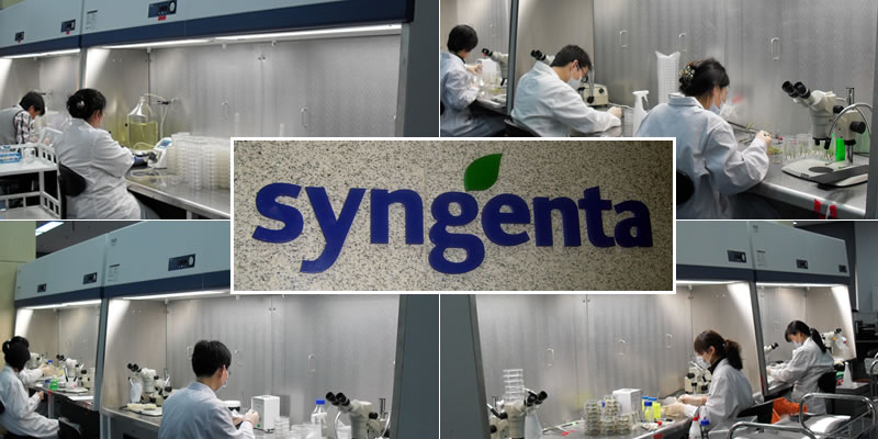 Syngenta China, Biotechnolgy and Genomic Research